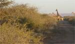 guepard-information-protection-cheetah