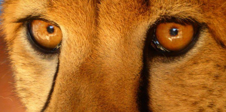 cheetah-guepard-information-protection