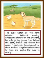guepard-information-conservation-cheetah