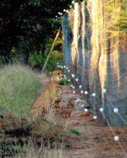 guepard-information-protection-cheetah